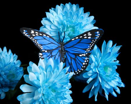 Blue carnations and butterfly