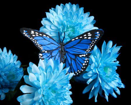 mariposa azul: Claveles azules y mariposa  Foto de archivo
