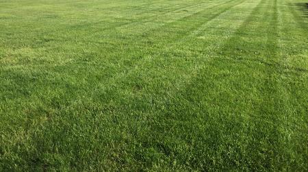 Well trimmed lawn image. Standard-Bild - 92652146