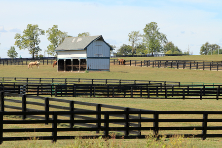 Horses grazing in a pasture with an old barn and wood fencing in the Kentucky Bluegrass region. Standard-Bild - 101834381