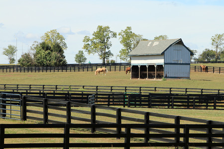 Horses grazing in a pasture with an old barn and wood fencing in the Kentucky Bluegrass region. Standard-Bild - 101834382