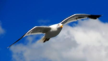 bariloche: Bird Stock Photo