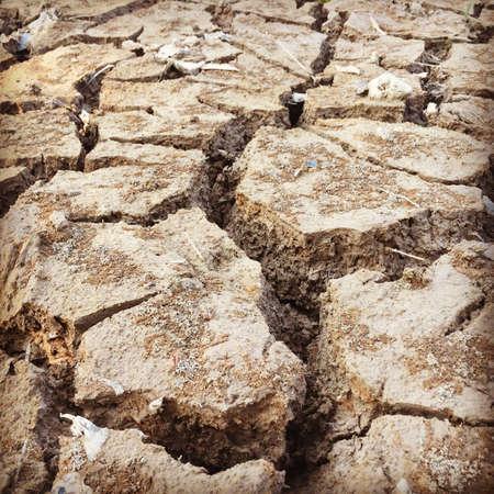 sequias: Una sequ�a despu�s de llover temporada
