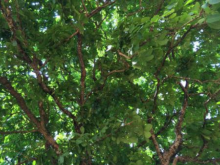 under a tree: Under a tree Stock Photo