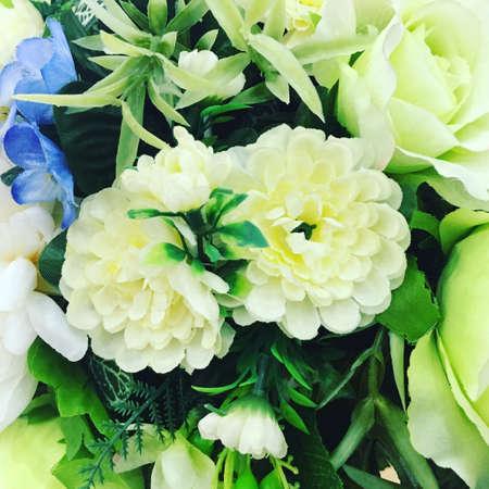 colour: White flowers Stock Photo