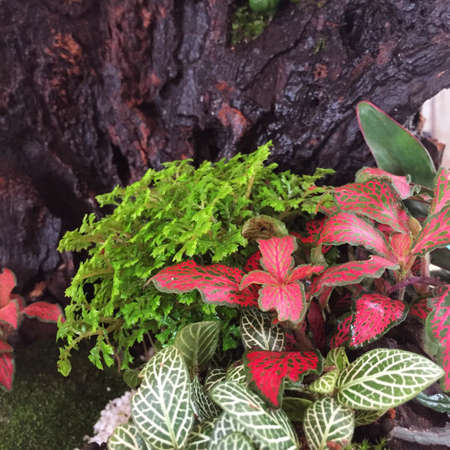 green plants: small garden