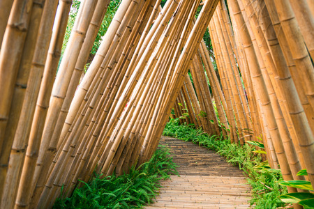 thick growth: Bamboo road Stock Photo