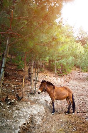 mule: Mule