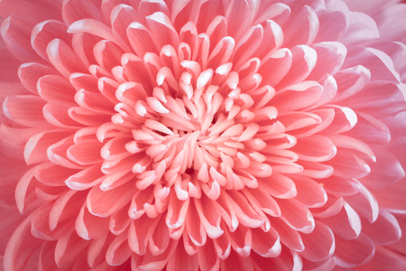flower background: Flower