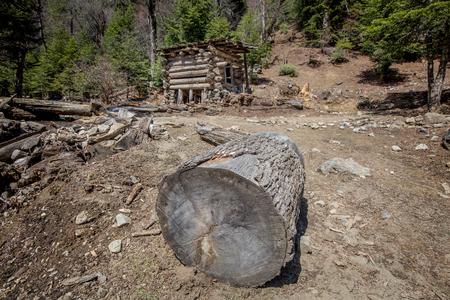 demolish: Tree trunk