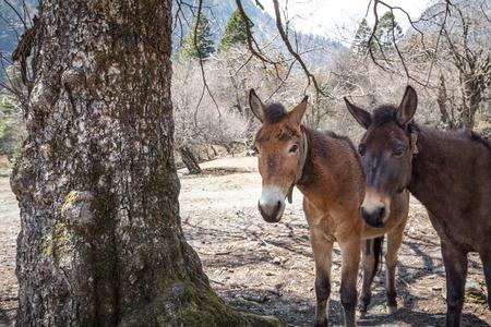 mule: Mule standing under the tree