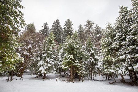 snow day: Snow day in forest Stock Photo