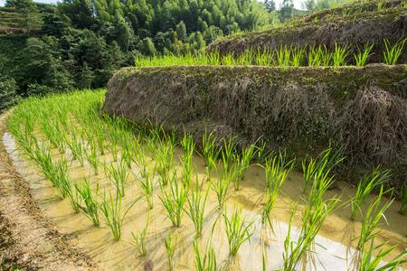 terraced fields Stock Photo