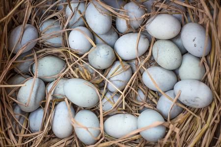 preserved egg Banco de Imagens