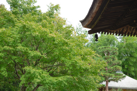 kyoto garden with architecture eaves