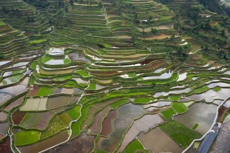 Terraced field in guizhou china Stok Fotoğraf - 128101760