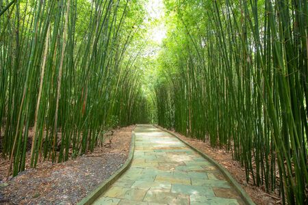 bamboo road in guizhou china Stockfoto