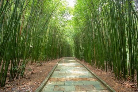 bamboo road in guizhou china Stok Fotoğraf