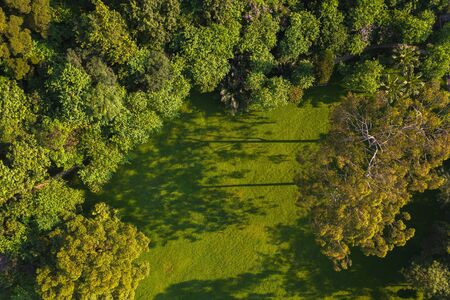 green nature high angle view