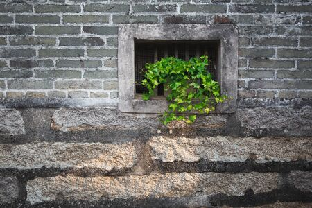 green plant on the wall