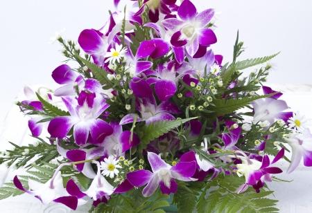 蘭の花 写真素材 - 21698802