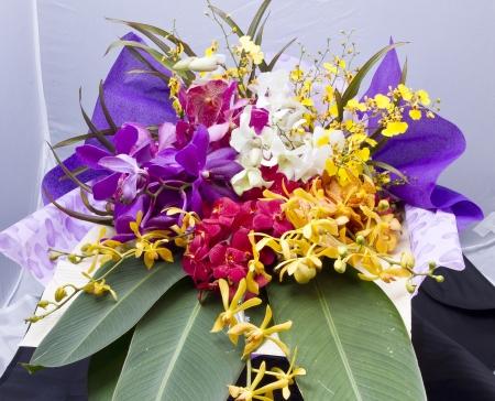 蘭の花 写真素材 - 21698807