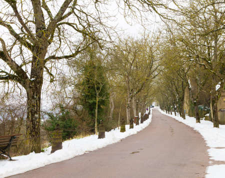 Snowy, tree-lined road Stock Photo - 21671505