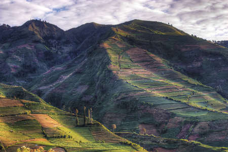 Quilted fields on the mountainside in Indonesia Stock Photo