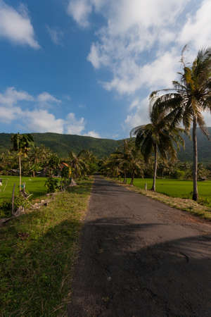 Palm tree lined rural road in Indonesia