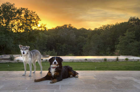Husky and Burmese dogs on the porch with the sunset behind them