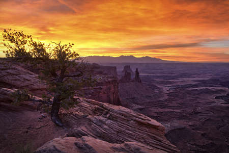 A tree at sunrise in Canyonlands National Park