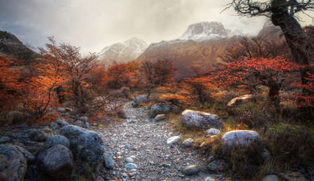 chalten: Path through the trees with snowy mountains in the background in El Chalten, Argentina