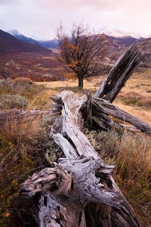 Broken tree trunk in the rugged landscape in El Chalten, Argentina Stock Photo