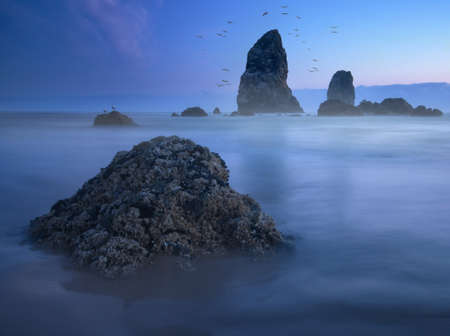 Birds, rocks and smooth water on Cannon beach, Oregon