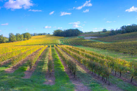 Rows of vineyards in France on a sunny day Stock Photo