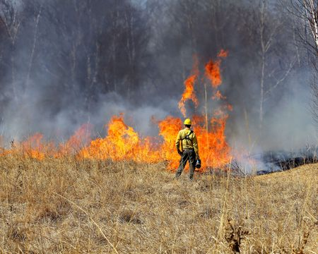 prescribed: Forester watching the fire in a controlled prarie burn for future growth.