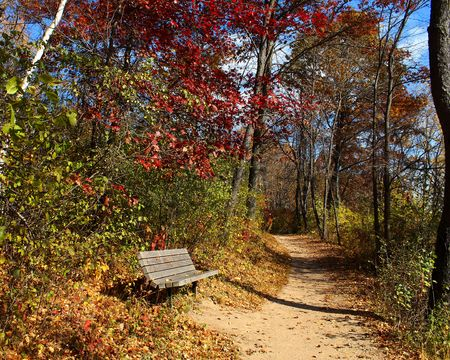 hiking path: Colorful Autumn trees and hiking path with bench.