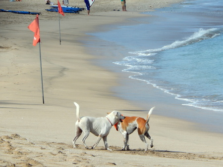 dogs at the beach photo