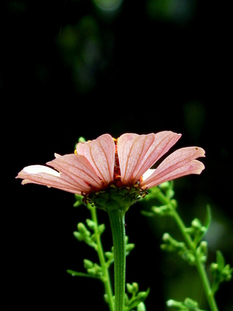 Single pink flower photo