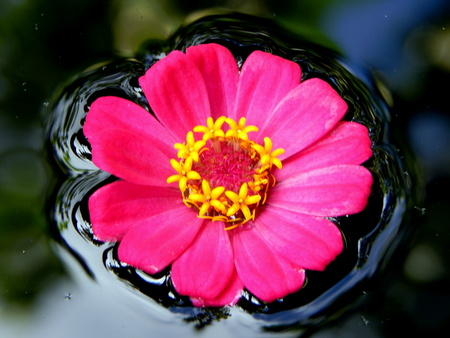 flower floating photo