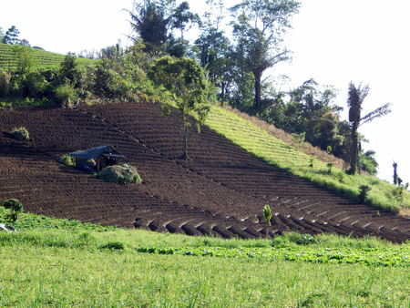 plots: grass and plots  for crops