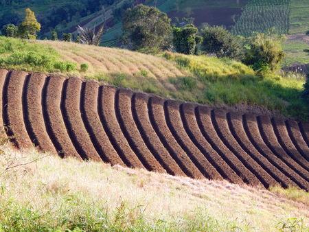 plots: plots for crops