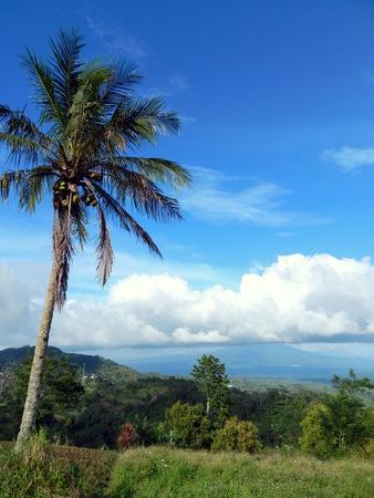cumulonimbus: Cumulonimbus cloud, blue sky and coconut tree Stock Photo