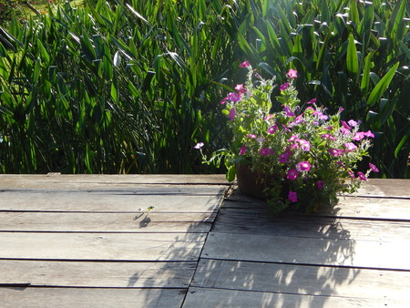 Flowers on the wooden terrace in the garden photo