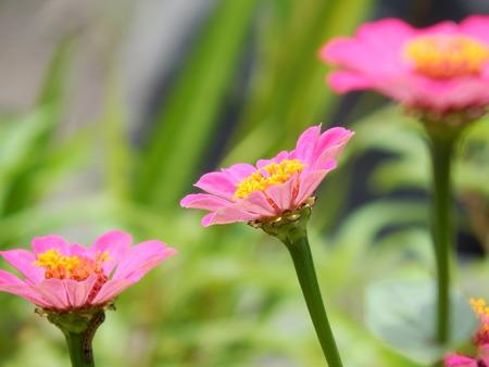 blosom: flowers in the garden Stock Photo