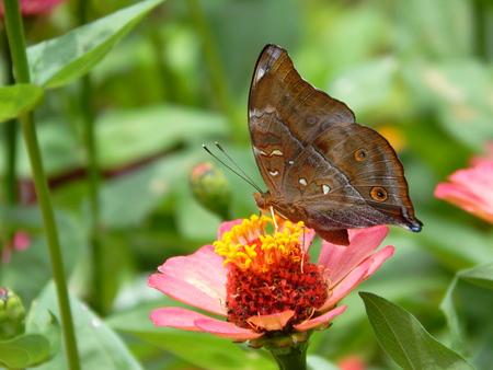 blosom: butterfly on flower