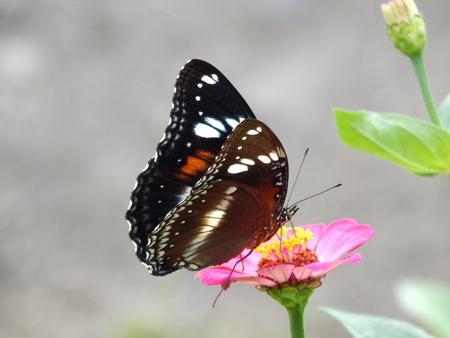 blosom: butterfly