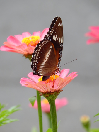 blosom: butterfly and flowers