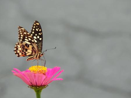 one butterfly on flower