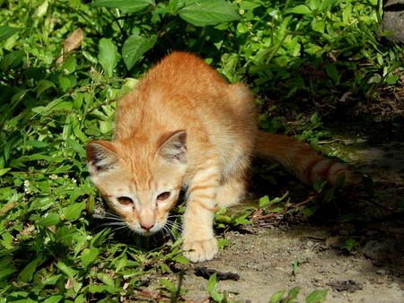 gato jugando: gato jugando en el jardín